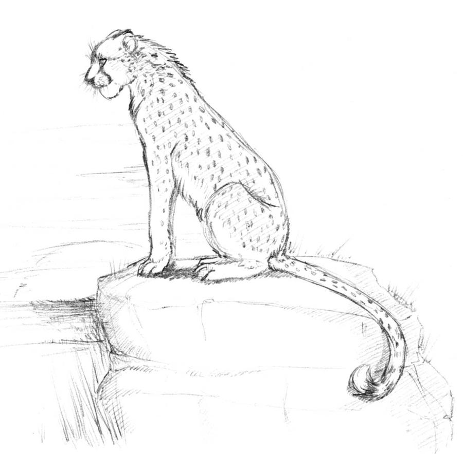 Cheetah sitting down drawing - photo#12