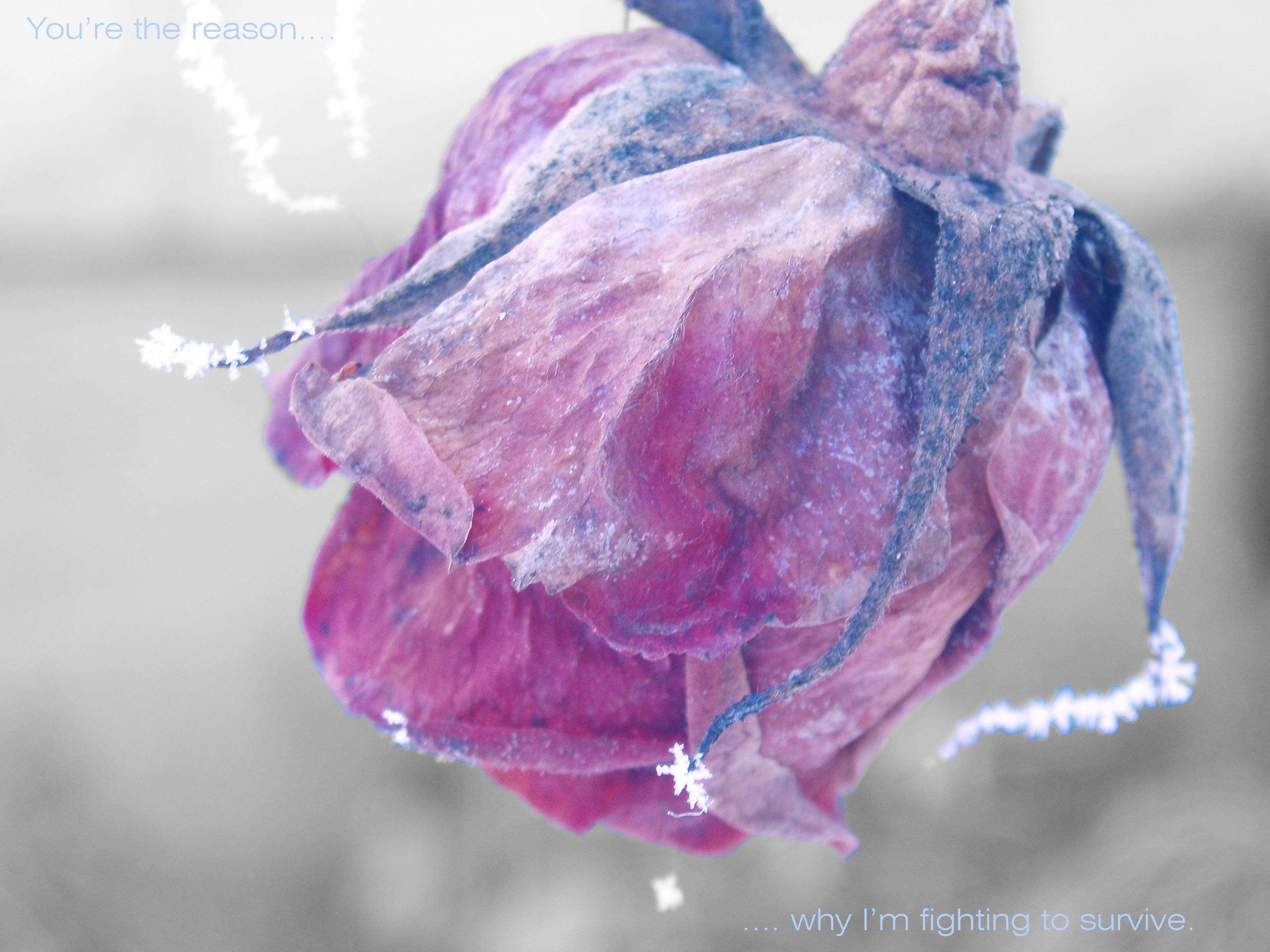 Frozen flower Flowers of Snow ️ Pinterest