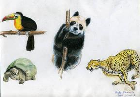Animals by Izar