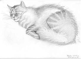 My cat 2 by Izar