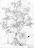 Lilac Shrub by Izar