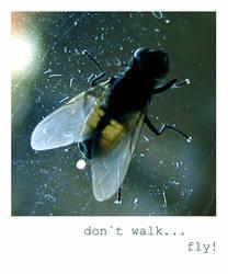 don t walk... by yellowish