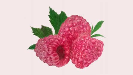 Rapsberry by Art1095