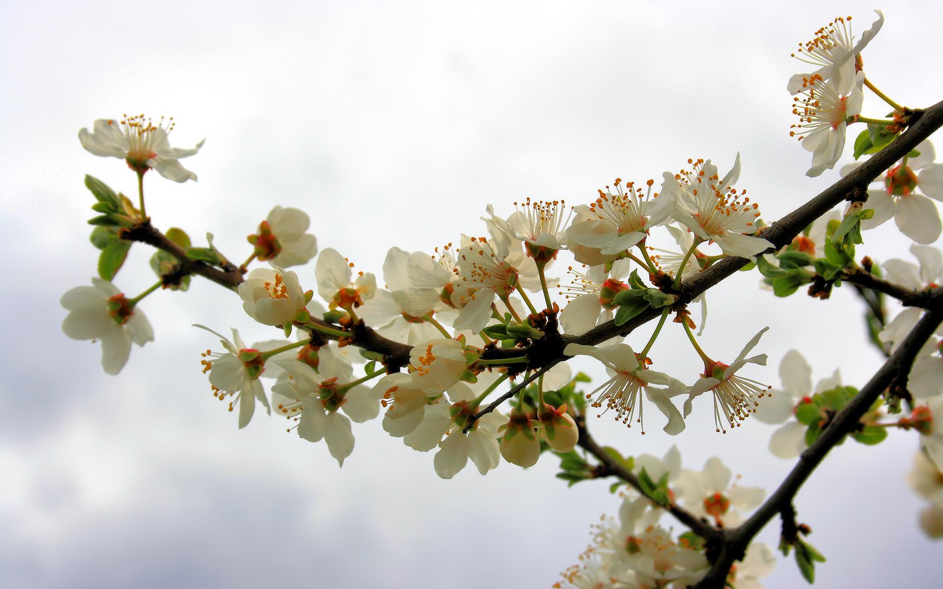 spring 2010 2