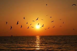 sunset 5 by qtwendy