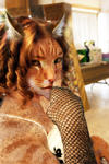 Pride and Prejudice Cat