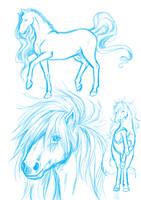 Horse practice