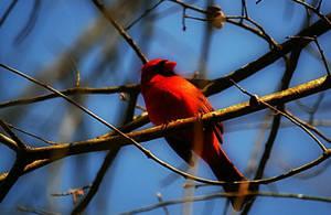 Bright Bird by bridgetbright