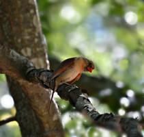 Little bird Big personality by bridgetbright