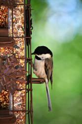 fancy little bird by bridgetbright