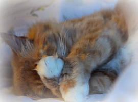 shy kitty sleeps by bridgetbright
