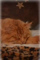 Cozy Orange cat by bridgetbright