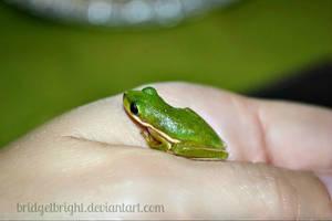 Little Green Friend by bridgetbright