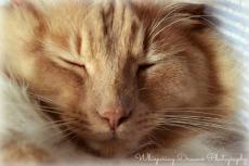 Close-up kitty by bridgetbright