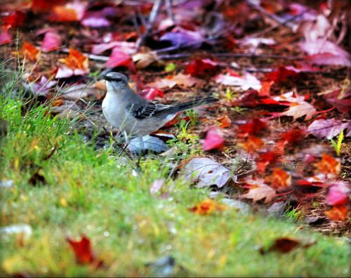 Autumn by bridgetbright