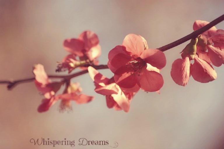 Sweet Spring by bridgetbright
