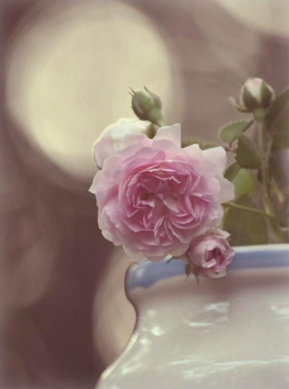Soft Sentiments by bridgetbright