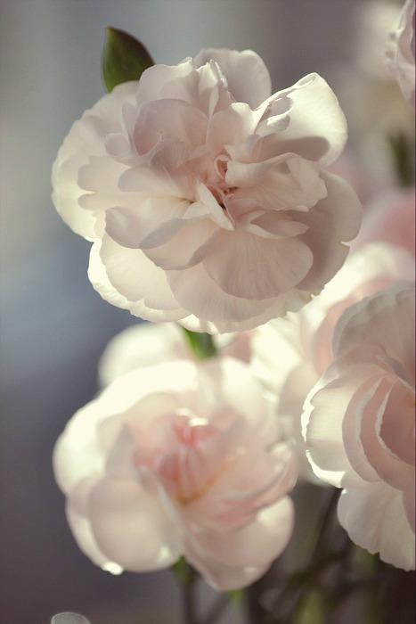 Soft Heart by bridgetbright