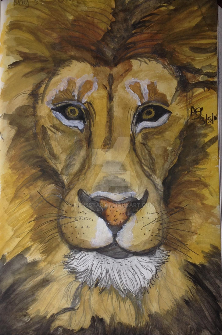 Lion by iridisstar