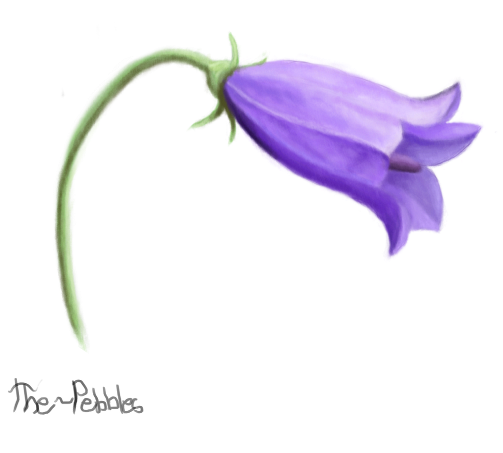 bluebell flower by thewonderb0t on deviantart bluebell flower by thewonderb0t bluebell flower by thewonderb0t bookvacationfo image
