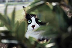 Hidden Kitten. by xXcherushiiXx