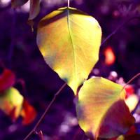 Neon Trees. by xXcherushiiXx