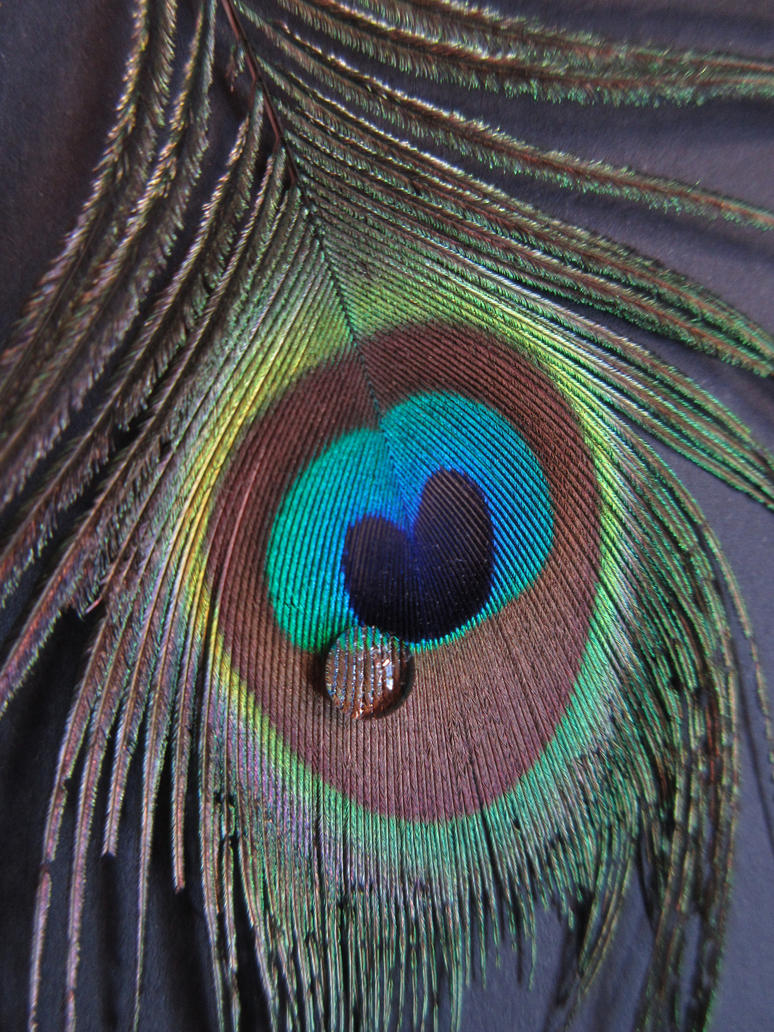 Paon triste... Crying_peacock_by_calidris555-dacuiag