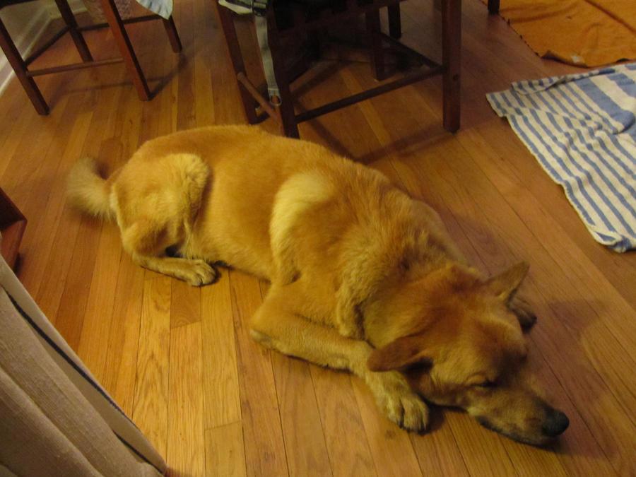 Watch Dogs Blocking Ctos Scans
