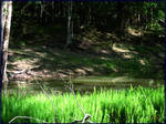 Swamplands: Stale Creek