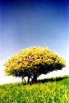 Fool's Garden - Lemon Tree by PASOV