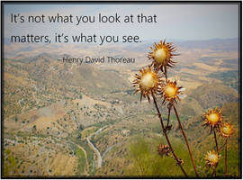 Thoreau: Its Not What...