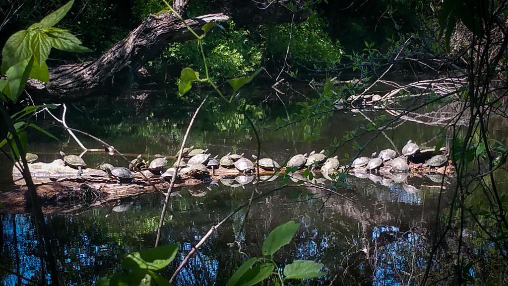 Turtle Log by mirroreyes1