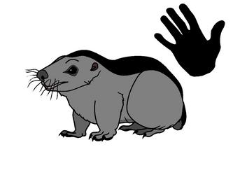Marmot Badger
