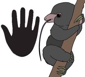 Nectar Sloth
