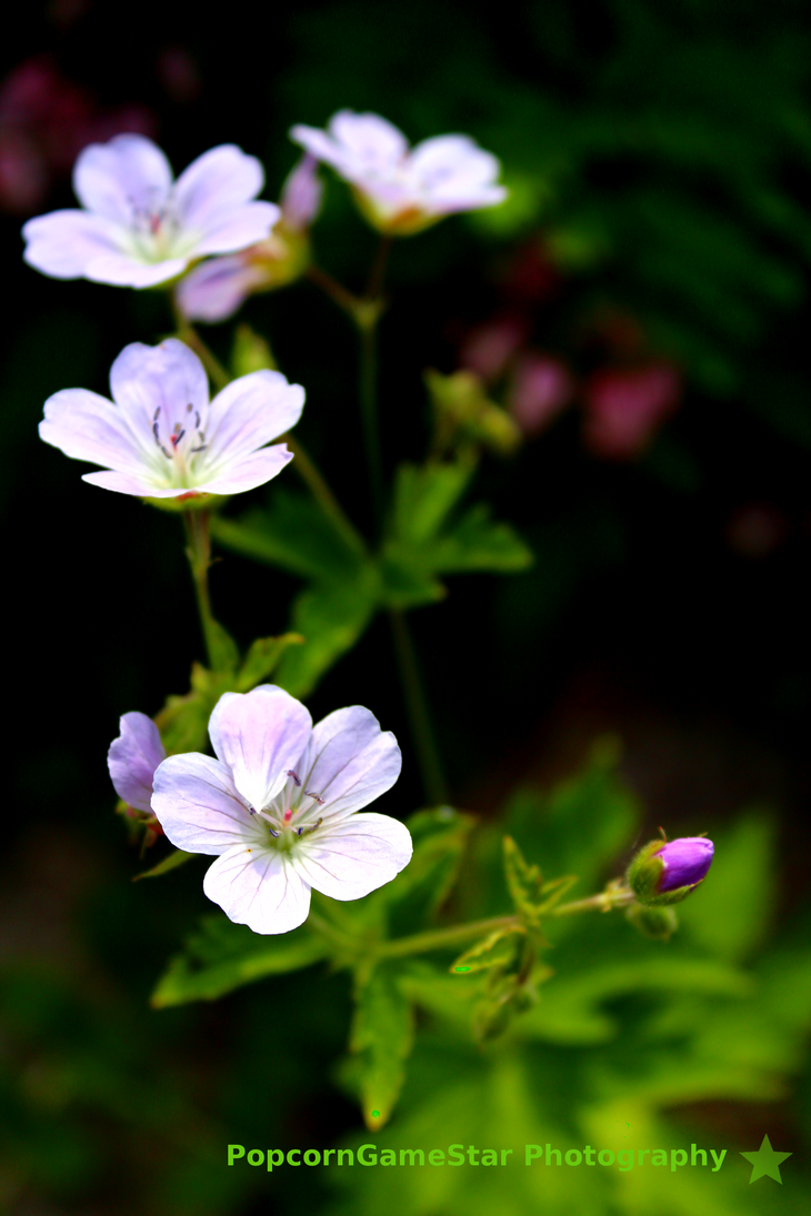 Flower Line by PopcornGameStar