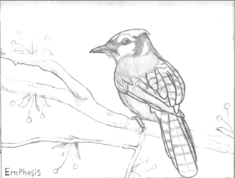 Blue Jay Drawing by iamtherealbender