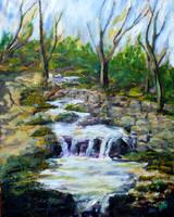 Ferndell Creek Noon