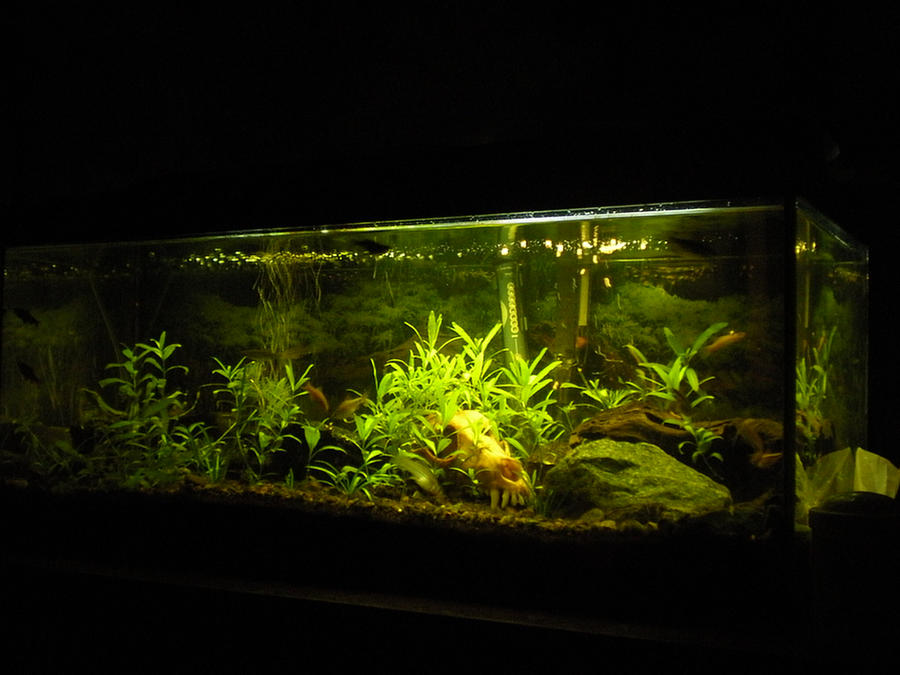 20 Gallon Planted Fish Tank By Unknown2011 On Deviantart