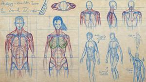Sexual dimorphism Study - w/Artbuddy RavenWilder