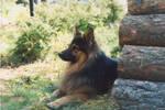 My dear dog