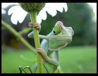 kammi kammi the chameleon by 95vtex