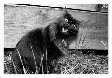 kittie cat by 95vtex