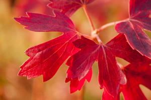 Spirit of Autumn by LotusAqua