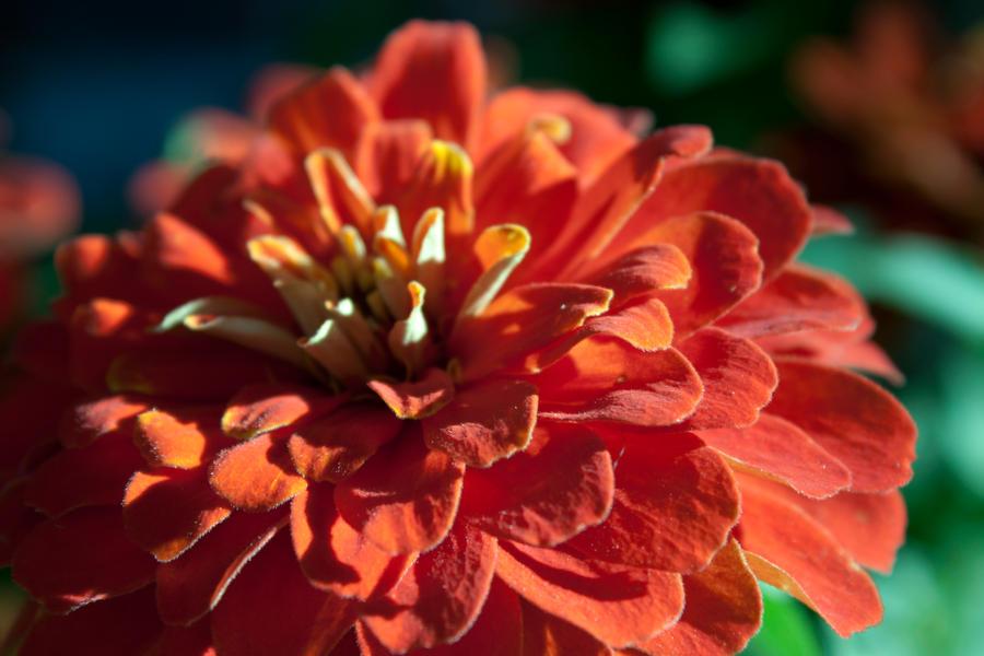 Sunday Bloom by LotusAqua
