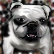 Little Bulldog by stillestilo