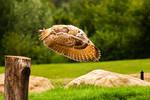 Owl Take Off 2