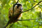 Little Adorable Monkey 1