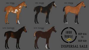 2019 IHS Dispersal Sale | Hip016-020