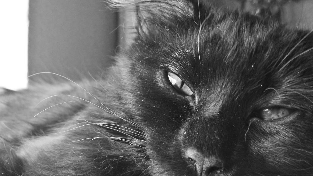 New Kitty Eva by AnakMoon