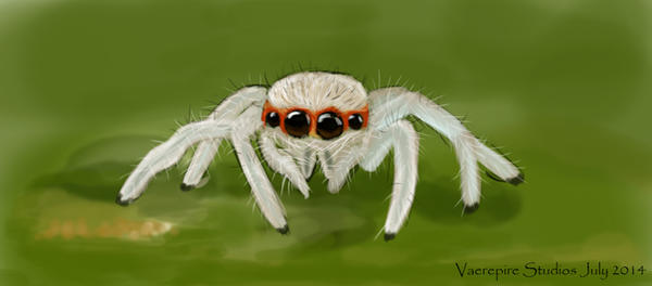 Jumping Spider by VaerepireStudios